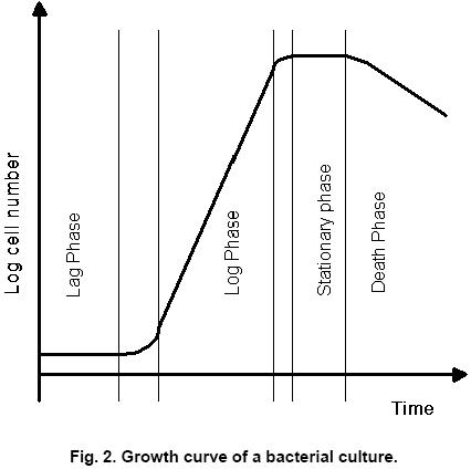 lag log vekstfase